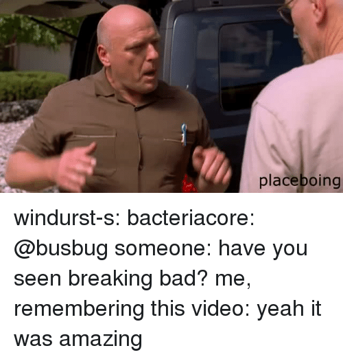 Bad, Breaking Bad, and Target: placeboing windurst-s:  bacteriacore:  @busbug   someone: have you seen breaking bad? me, remembering this video: yeah it was amazing