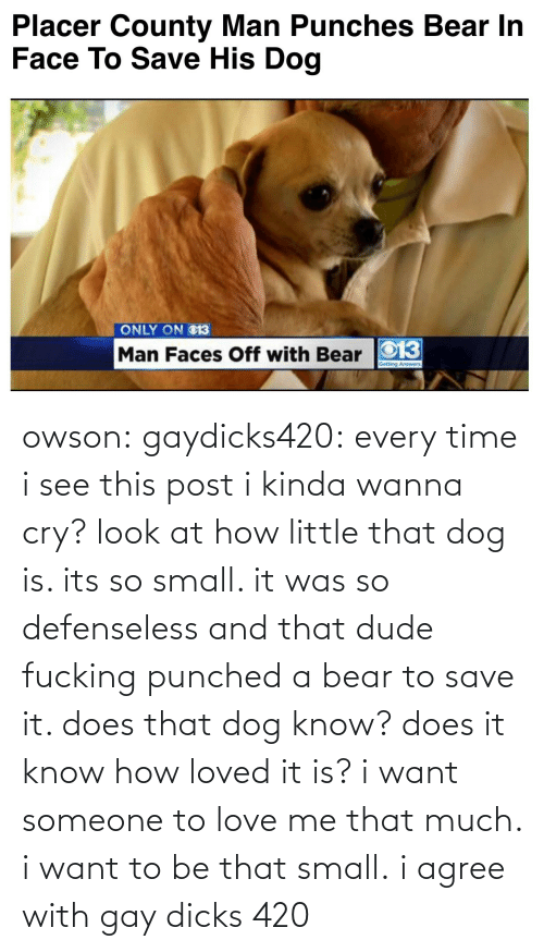 Bear: Placer County Man Punches Bear In  Face To Save His Dog   ONLY ON O13  Man Faces Off with Bear O13 owson: gaydicks420:  every time i see this post i kinda wanna cry? look at how little that dog is. its so small. it was so defenseless and that dude fucking punched a bear to save it. does that dog know? does it know how loved it is? i want someone to love me that much. i want to be that small.  i agree with gay dicks 420