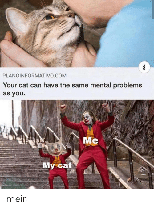 Mental: PLANOINFORMATIVO.COM  Your cat can have the same mental problems  as you.  Me  My cat meirl