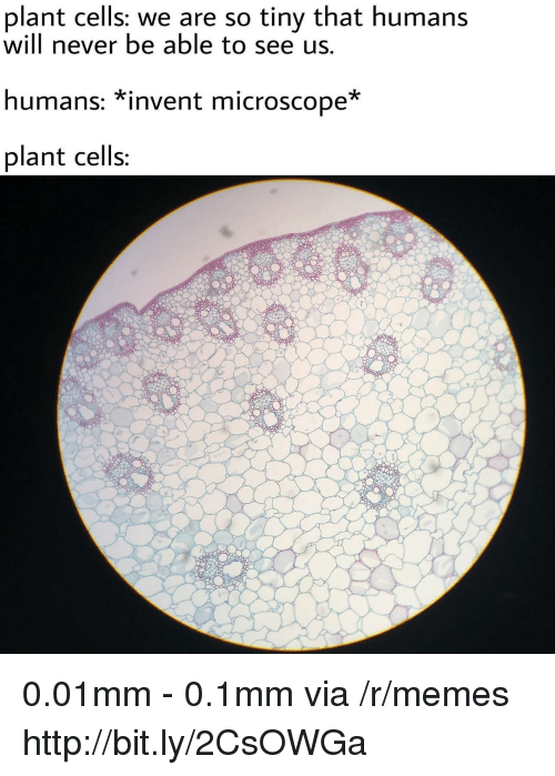 Memes, Http, and Never: plant cells; we are so tiny that humans  will never be able to see us.  humans: *invent microscope*  plant cells 0.01mm - 0.1mm via /r/memes http://bit.ly/2CsOWGa