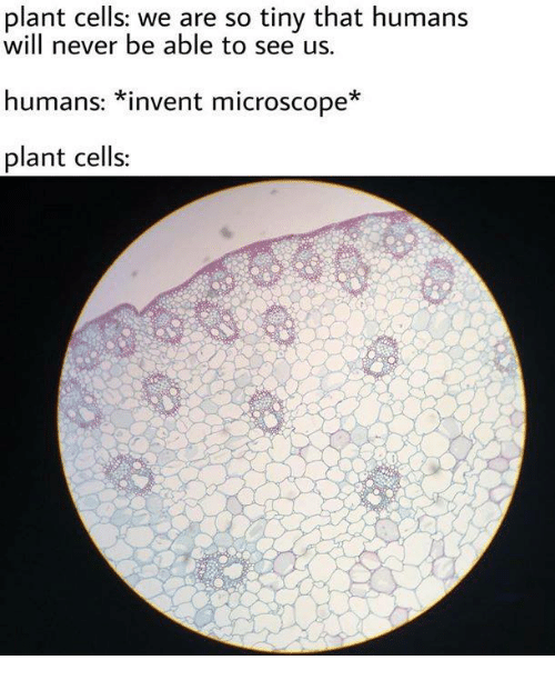 Memes, Never, and 🤖: plant cells: we are so tiny that humans  will never be able to see us  humans: *invent microscope  plant cells