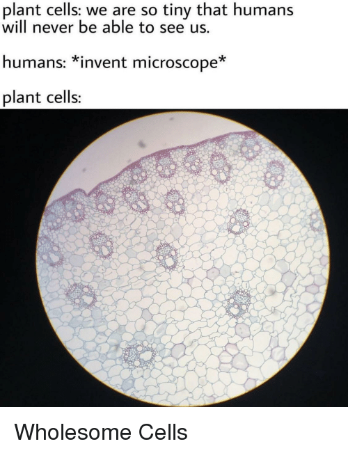 Wholesome, Never, and Tiny: plant cells: we are so tiny that humans  will never be able to see us.  humans: *invent microscope  plant cells Wholesome Cells