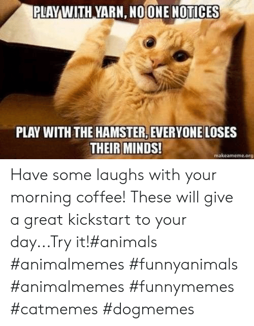 Animals, Coffee, and Hamster: PLAYWITH YARN, NOONE NOTICES  PLAY WITH THE HAMSTER, EVERYONE LOSES  THEIR MINDS!  makeameme.org Have some laughs with your morning coffee! These will give a great kickstart to your day...Try it!#animals #animalmemes #funnyanimals #animalmemes #funnymemes #catmemes #dogmemes