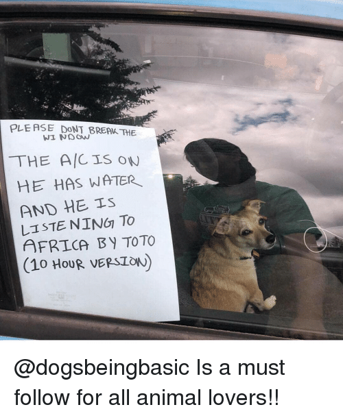 Africa, Memes, and Animal: PLE ASE DONT BREAK THE  THE ACIS oW  HE HAS WATER  AND HE IS  AFRICA BY TOTO  (10 HouR VERSIOW) @dogsbeingbasic Is a must follow for all animal lovers!!