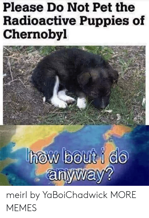 Dank, Memes, and Puppies: Please Do Not Pet the  Radioactive Puppies of  Chernobyl  anyway? meirl by YaBoiChadwick MORE MEMES