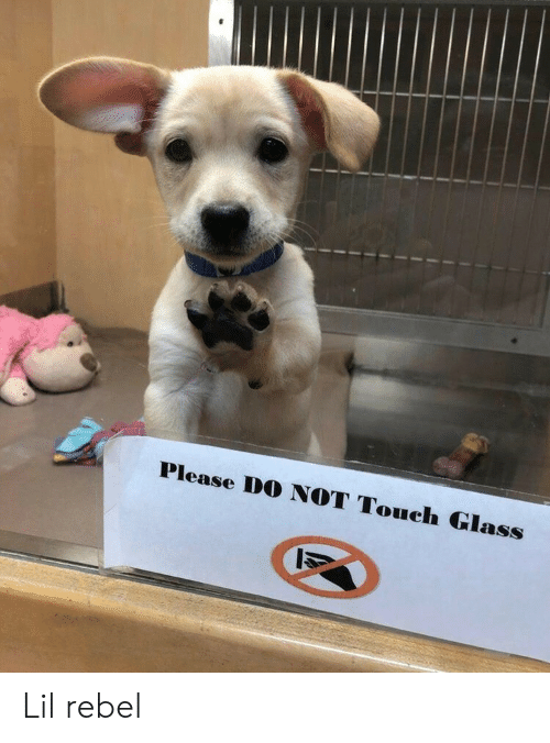 Glass, Touch, and Lil: Please DO NOT Touch Glass Lil rebel