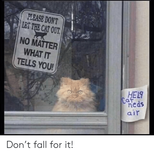 hel: PLEASE DON'T  LET THE CAT OUT.  NO MATTER  WHAT IT  TELLS YOU!  HEL  Caf  neds  air Don't fall for it!