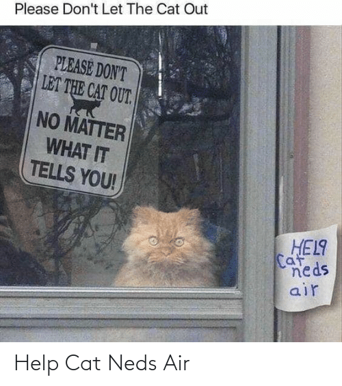 Please Dont: Please Don't Let The Cat Out  PLEASE DON'T  LET THE CAT OUT.  NO MATTER  WHAT IT  TELLS YOU!  HEL9  Caf  neds  air Help Cat Neds Air