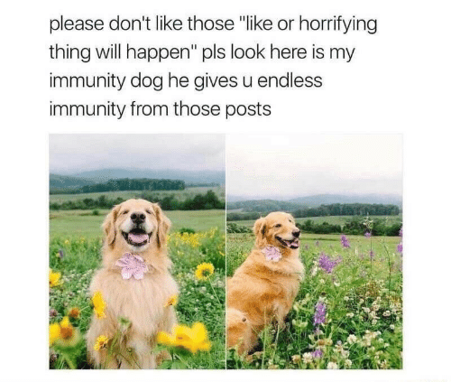 "Dog, Will, and Thing: please don't like those ""like or horrifying  thing will happen"" pls look here is my  immunity dog he gives u endless  immunity from those posts"