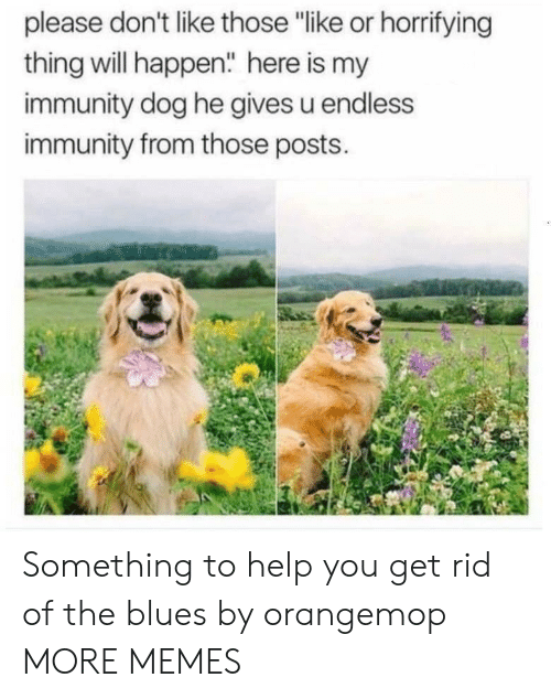 "Dank, Memes, and Target: please don't like those ""like or horrifying  thing will happen"" here is my  immunity dog he gives u endless  immunity from those posts. Something to help you get rid of the blues by orangemop MORE MEMES"