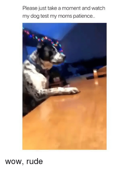 Memes, Moms, and Rude: Please just take a moment and watch  my dog test my moms patience.. wow, rude