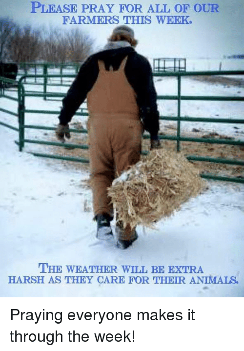 Animals, Memes, and The Weather: PLEASE PRAY FOR ALL OF OUR  FARMERS THIS WEEK  THE WEATHER WILL BE EXTRA  HARSH AS THEY CARE FOR THEIR ANIMALS Praying everyone makes it through the week!