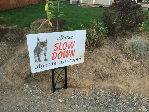 Cats, Down, and Please: Please  SLOW  1 DOWN  My cats are stupid