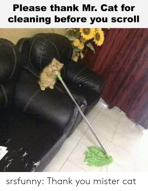 Tumblr, Thank You, and Blog: Please thank Mr. Cat for  cleaning before you scroll srsfunny:  Thank you mister cat