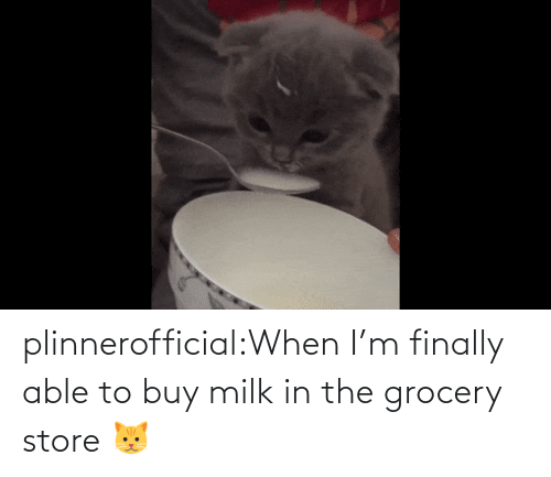 Able: plinnerofficial:When I'm finally able to buy milk in the grocery store 🐱