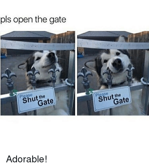 Memes, Adorable, and 🤖: pls open the gate  te  the  Gate Adorable!