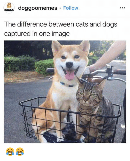 Cats, Dogs, and Memes: po860 doggoomemes Follow  DOGGO  The difference between cats and dogs  captured in one image 😂😂