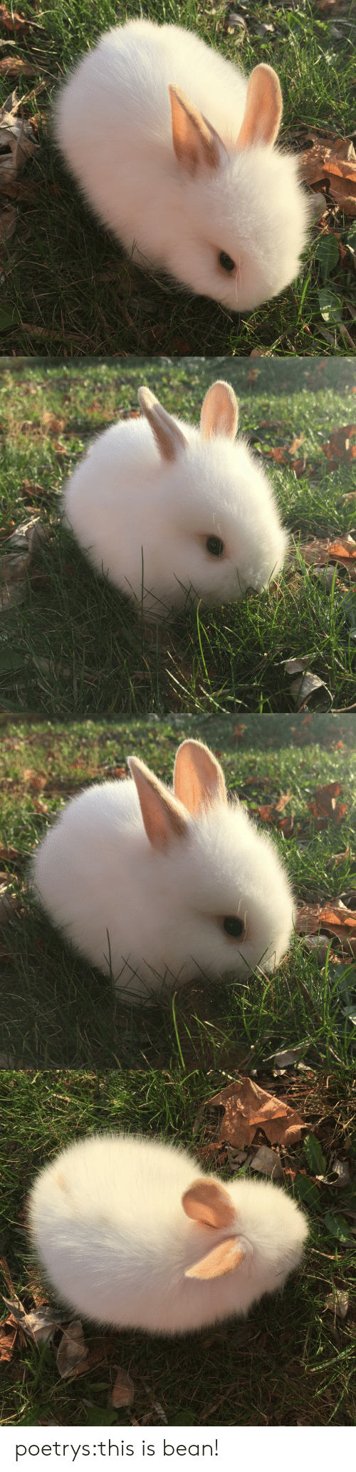 Tumblr, Blog, and Http: poetrys:this is bean!