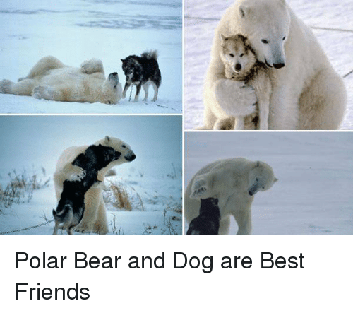 Polar Bear And Dog Are Best Friends Meme On Conservative Memes