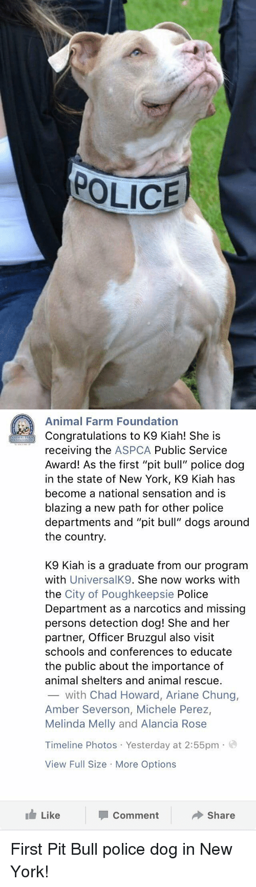 "Aspca: POLICE   Animal Farm Foundation  Congratulations to K9 Kiah! She is  receiving the  ASPCA Public Service  Award! As the first ""pit bull"" police dog  in the state of New York, K9 Kiah has  become a national sensation and is  blazing a new path for other police  departments and ""pit bull"" dogs around  the country  K9 Kiah is a graduate from our program  with  UniversalK9. She now works with  the City of Poughkeepsie Police  Department as a narcotics and missing  persons detection dog! She and her  partner, Officer Bruzgul also visit  schools and conferences to educate  the public about the importance of  animal shelters and animal rescue.  with Chad Howard, Ariane Chung,  Amber Severson, Michele Perez,  Melinda Melly and Alancia Rose  Timeline Photos Yesterday at 2:55pm  a  View Full Size More Options  Like  Share  Comment First Pit Bull police dog in New York!"