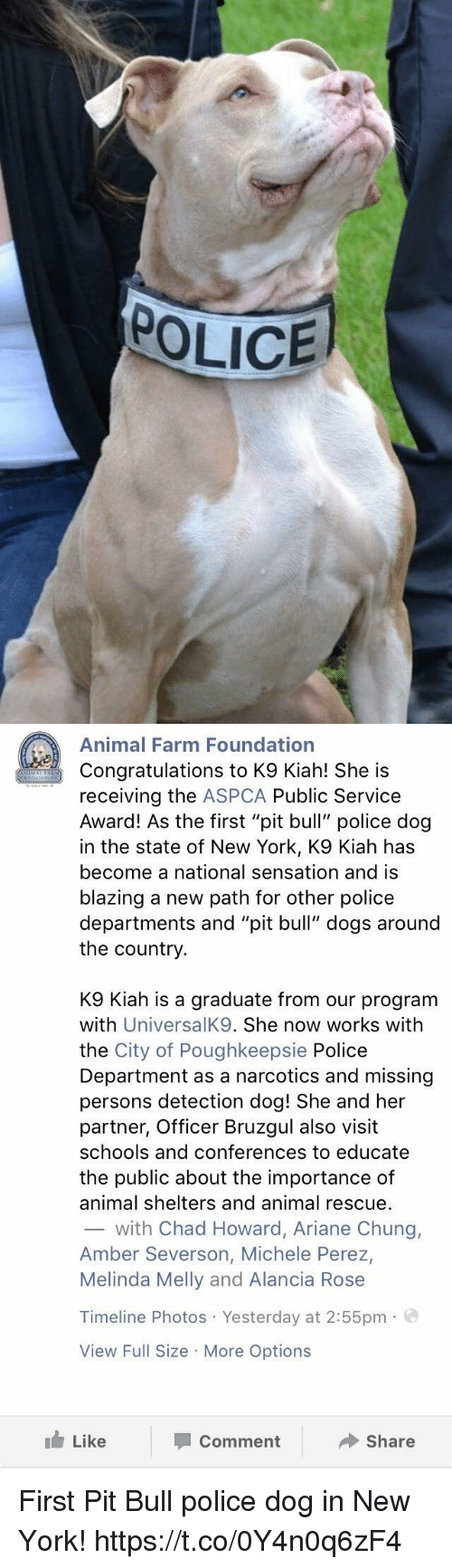 "Aspca: POLICE   Animal Farm Foundation  Congratulations to K9 Kiah! She is  receiving the  ASPCA Public Service  Award! As the first ""pit bull"" police dog  in the state of New York, K9 Kiah has  become a national sensation and is  blazing a new path for other police  departments and ""pit bull"" dogs around  the country  K9 Kiah is a graduate from our program  with  UniversalK9. She now works with  the City of Poughkeepsie Police  Department as a narcotics and missing  persons detection dog! She and her  partner, Officer Bruzgul also visit  schools and conferences to educate  the public about the importance of  animal shelters and animal rescue.  with Chad Howard, Ariane Chung,  Amber Severson, Michele Perez,  Melinda Melly and Alancia Rose  Timeline Photos Yesterday at 2:55pm  a  View Full Size More Options  Like  Share  Comment First Pit Bull police dog in New York! https://t.co/0Y4n0q6zF4"