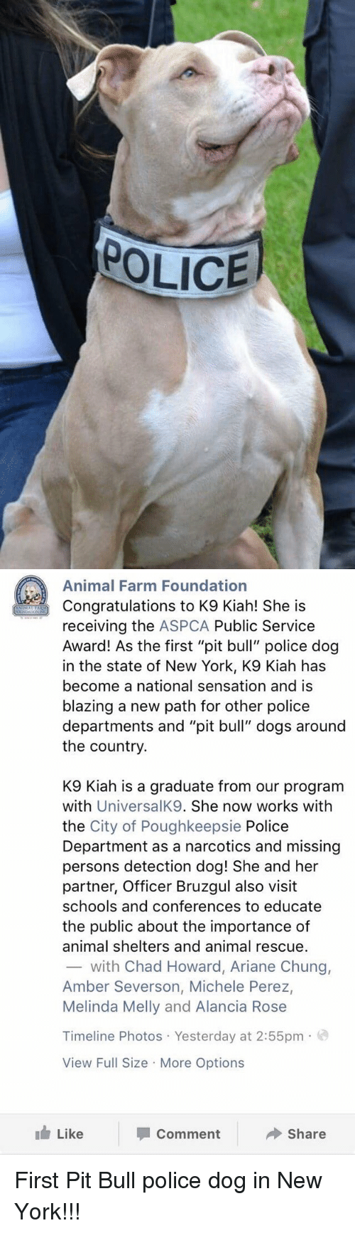 "Aspca: POLICE   Animal Farm Foundation  Congratulations to K9 Kiah! She is  receiving the ASPCA Public Service  Award! As the first ""pit bull"" police dog  in the state of New York, K9 Kiah has  become a national sensation and is  blazing a new path for other police  departments and ""pit bull"" dogs around  the country.  K9 lah is a graduate from our program  with  UniversalK9. She now works with  the City of Poughkeepsie Police  Department as a narcotics and missing  persons detection dog! She and her  partner, Officer Bruzgul also visit  schools and conferences to educate  the public about the importance of  animal shelters and animal rescue.  with Chad Howard, Ariane Chung,  Amber Severson, Michele Perez,  Melinda Melly and Alancia Rose  Timeline Photos Yesterday at 2:55pm  o  View Full Size More Options  Like  Share  Comment First Pit Bull police dog in New York!!!"