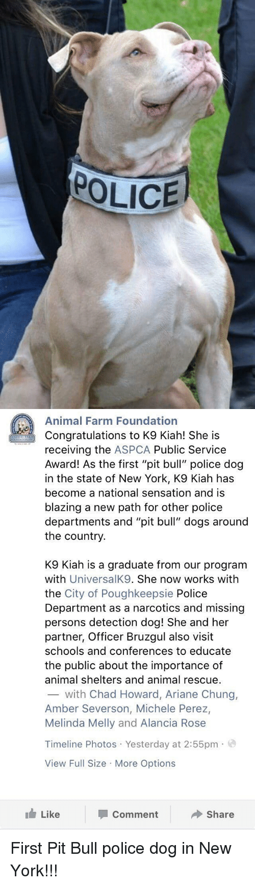 "Aspca: POLICE   Animal Farm Foundation  Congratulations to K9 Kiah! She is  receiving the  ASPCA Public Service  Award! As the first ""pit bull"" police dog  in the state of New York, K9 Kiah has  become a national sensation and is  blazing a new path for other police  departments and ""pit bull"" dogs around  the country  K9 Kiah is a graduate from our program  with  UniversalK9. She now works with  the City of Poughkeepsie Police  Department as a narcotics and missing  persons detection dog! She and her  partner, Officer Bruzgul also visit  schools and conferences to educate  the public about the importance of  animal shelters and animal rescue.  with Chad Howard, Ariane Chung,  Amber Severson, Michele Perez,  Melinda Melly and Alancia Rose  Timeline Photos Yesterday at 2:55pm.  View Full Size More Options  Like  Share  Comment First Pit Bull police dog in New York!!!"
