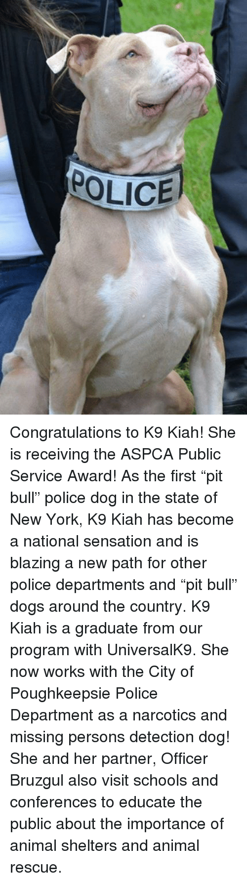 "Aspca: POLICE Congratulations to K9 Kiah! She is receiving the ASPCA Public Service Award! As the first ""pit bull"" police dog in the state of New York, K9 Kiah has become a national sensation and is blazing a new path for other police departments and ""pit bull"" dogs around the country.   K9 Kiah is a graduate from our program with UniversalK9. She now works with the City of Poughkeepsie Police Department as a narcotics and missing persons detection dog! She and her partner, Officer Bruzgul also visit schools and conferences to educate the public about the importance of animal shelters and animal rescue."