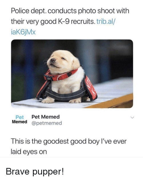 Memed: Police dept. conducts photo shoot with  their very good K-9 recruits. trib.al/  iaK6jMx  Pet Pet Memed  Memed @petmemed  est good boy l've ever  T his is the good  laid eyes on Brave pupper!