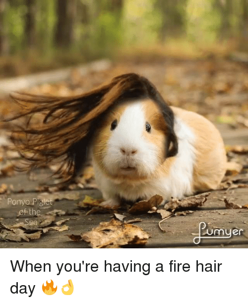 piglets: Ponyo Piglet  of the  Umuer When you're having a fire hair day 🔥👌