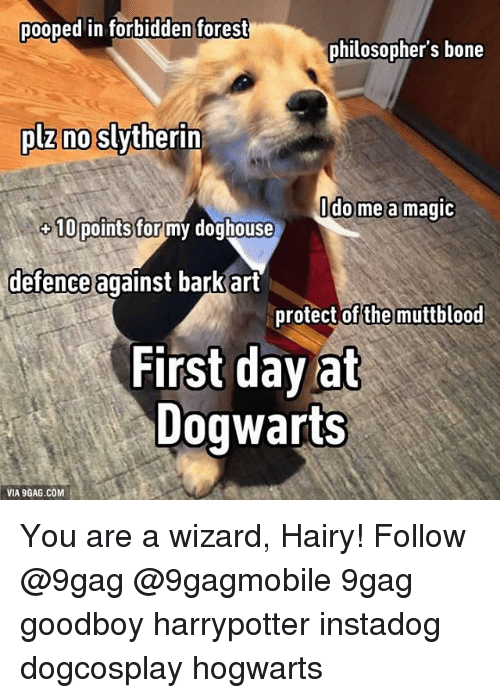 doghouse: pooped in forbidden forest  philosophers bone  no Slytherin  plz do me a magic  10 points for  my doghouse  defence against barkart  protect of the muttblood  First day at  Dogwarts  VIA 9GAG.COM You are a wizard, Hairy! Follow @9gag @9gagmobile 9gag goodboy harrypotter instadog dogcosplay hogwarts