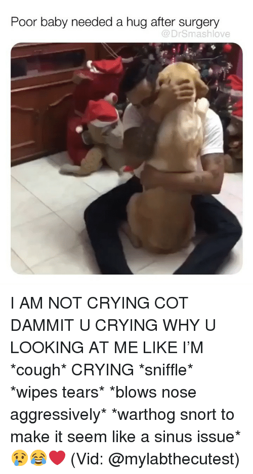 Crying, Memes, and Not Crying: Poor baby needed a hug after surgery  @DrSmashlove I AM NOT CRYING COT DAMMIT U CRYING WHY U LOOKING AT ME LIKE I'M *cough* CRYING *sniffle* *wipes tears* *blows nose aggressively* *warthog snort to make it seem like a sinus issue* 😢😂❤️ (Vid: @mylabthecutest)