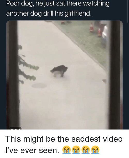 Memes, Video, and Girlfriend: Poor dog, he just sat there watching  another dog drill his girlfriend. This might be the saddest video I've ever seen. 😭😭😭😭