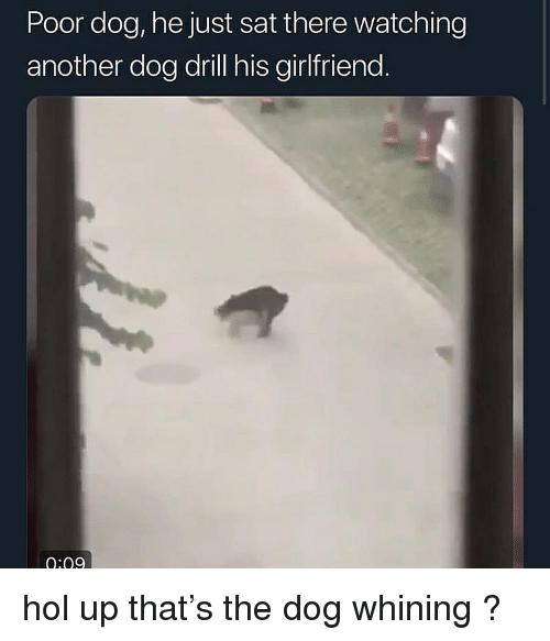 Girlfriend, Dank Memes, and Hol Up: Poor dog, he just sat there watching  another dog drill his girlfriend  0:09 hol up that's the dog whining ?