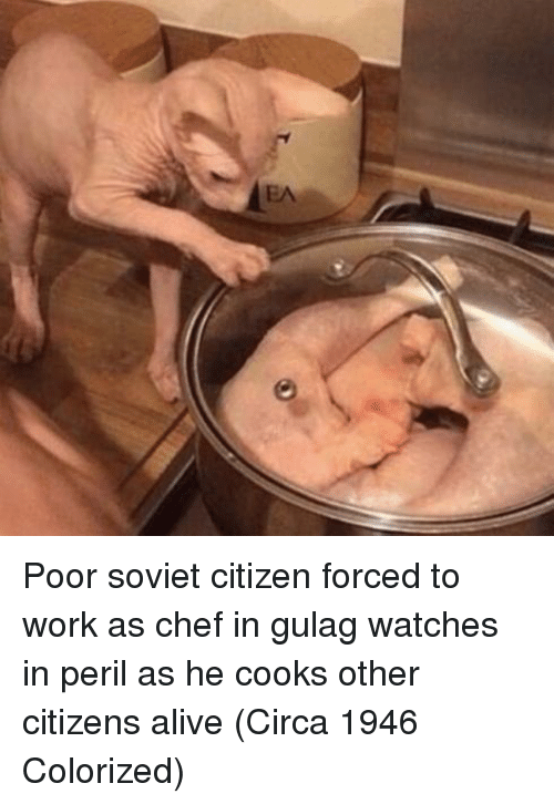 gulag: Poor soviet citizen forced to work as chef in gulag watches in peril as he cooks other citizens alive (Circa 1946 Colorized)