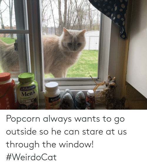 Popcorn: Popcorn always wants to go outside so he can stare at us through the window! #WeirdoCat