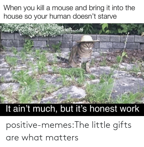 gifts: positive-memes:The little gifts are what matters