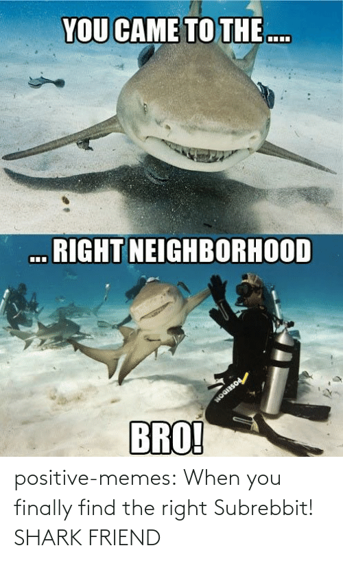 memes tumblr: positive-memes:  When you finally find the right Subrebbit!  SHARK FRIEND