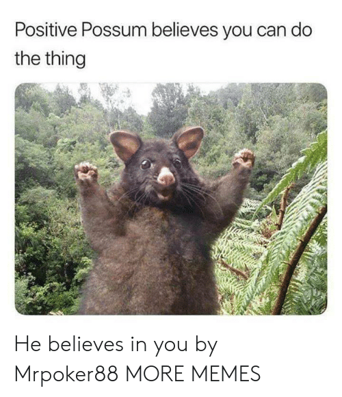 Possum: Positive Possum believes you can do  the thing He believes in you by Mrpoker88 MORE MEMES