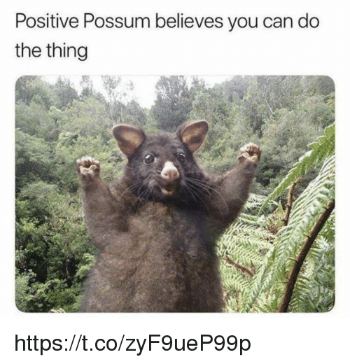 Possum: Positive Possum believes you can do  the thing https://t.co/zyF9ueP99p
