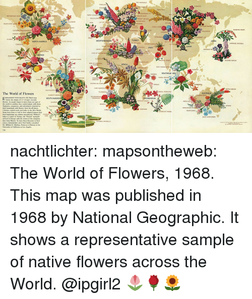 """explorers: POT MARIGOLD  CLEMATIS  FORSYTHIA  SWEET SCABIOU  ENGLISH DAISY  FORGET-ME-NOT  POLYANTHUS  PHLOX  LILY OF THE VALLE  BLACK-EYED SUSAN  EUROPE  CHRYSANTHEMUM  CHINA ASTER  BLEEDING HEART  CANADA ANEMONE  CLARKIAM,.ty.  NORTH AMERICA  MEDITERRANEAN  TURKEY  FLAME AZALEA  JAPANESE WISTERIA  CHINA  HYACINTH IRAN  GRAPE H  ABELIA  TIGERFL  SWEFT  STAR-C  MEXICO  ORIENTAL POPPY  KURUME AZALEA  POKER PLANT  BIRD-OF-PARADISE  FLOWER  EAST INDIAN LOTUS  SCARLET SAGE  SOUTHEAS ASI  GERBERA  NASTURTIUM  HIBISCUS  CASTOR-CIL PLANT  FREESIA  BOTTLE BRUSH  ROYAL POINCIANA  The World of Flowers  AUSTRALIA  PELARGONIUM  MBLAZONED WITH BEAUTY, this floral map  SOUTH AMERICA  FLOWER  shows the origins of 117 of man's favorite  AFRICAN VIOLET  flowers. As people began to move from one part of  the world to another, they carried plants with them.  Explorers, conquerors, and adventurers returned teo  their homelands with flowers from far off places.  Colonists carried seeds and bulbs to the New World  Some have done so well in their adopted regions that  their beginnings are seldom remembered. Holland's CYPRESS  tulip is a native of Turkey; the """"French"""" marigold  arrived in Europe with the return of the conquista-  dors from Mexico. To trace these blossoms to their  source, GEOCRAPHIC artist Ned Seider consulted  Dr. Mildred E. Mathias, Professor of Botany at the  University of California at Los Angeles.  SWAN RIVER DAISY  CROWN OF THORN  BLUE LACEFLOWER  VICTORIA wATERLİLY nachtlichter: mapsontheweb:  The World of Flowers, 1968. This map was published in 1968 by National Geographic. It shows a representative sample of native flowers across the World.   @ipgirl2 🌷🌹🌻"""