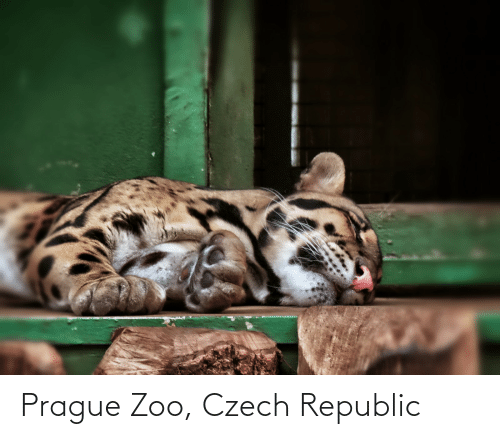 Prague: Prague Zoo, Czech Republic