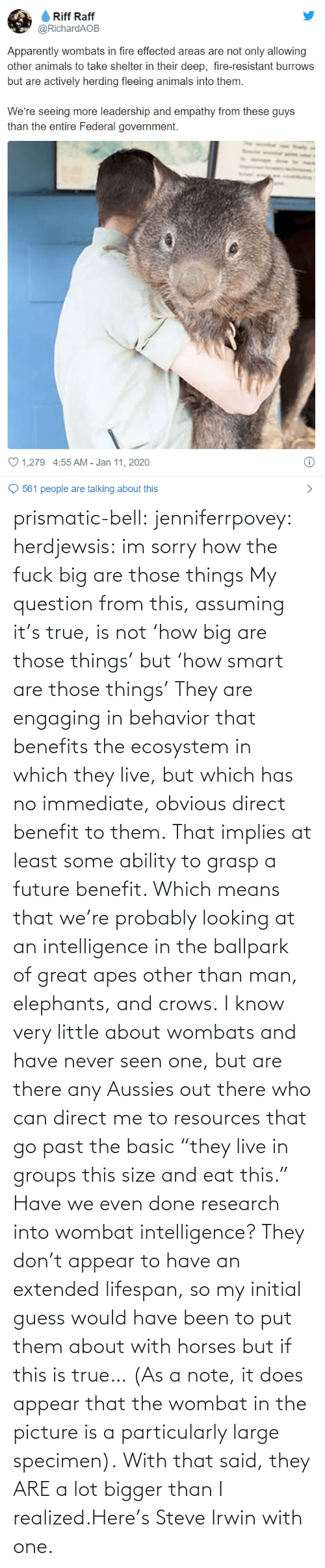 "Guess: prismatic-bell:  jenniferrpovey: herdjewsis: im sorry how the fuck big are those things My question from this, assuming it's true, is not 'how big are those things' but 'how smart are those things' They are engaging in behavior that benefits the ecosystem in which they live, but which has no immediate, obvious direct benefit to them. That implies at least some ability to grasp a future benefit. Which means that we're probably looking at an intelligence in the ballpark of great apes other than man, elephants, and crows. I know very little about wombats and have never seen one, but are there any Aussies out there who can direct me to resources that go past the basic ""they live in groups this size and eat this."" Have we even done research into wombat intelligence? They don't appear to have an extended lifespan, so my initial guess would have been to put them about with horses but if this is true… (As a note, it does appear that the wombat in the picture is a particularly large specimen).  With that said, they ARE a lot bigger than I realized.Here's Steve Irwin with one."