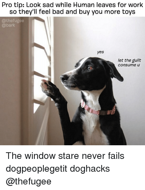 Bad, Memes, and Work: Pro tip: Look sad while Human leaves for work  so they'll feel bad and buy you more toys  @thefugee  @bark  yes  let the guilt  Consume u The window stare never fails dogpeoplegetit doghacks @thefugee