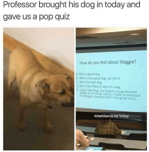 Dogs, Pop, and Best: Professor brought his dog in today and  gave us a pop quiz  How do you feel about Maggie?  A She's a good dog  8 Shes a very good dog, yes she is  C She's the best dog  o She is the Platonic ideal of a dog  E. don't ke dogs, but despite my generalized  distke of all things canine, I make an exception  for Maggie, because that's how great she is  Attendance for today