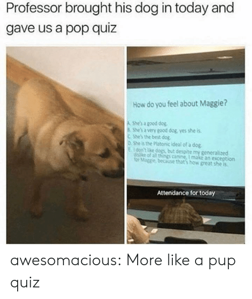 Dogs, Pop, and Tumblr: Professor brought his dog in today and  gave us a pop quiz  How do you feel about Maggie?  A She's a good dog  She's a very good dog yes she is  CShe's the best dog  0 She is the Platonic ideal of a dog  Eon't ke dogs but despite my generalized  diske of all things canine, I make an exception  for Mage because that's how great she is  Attendance for today awesomacious:  More like a pup quiz