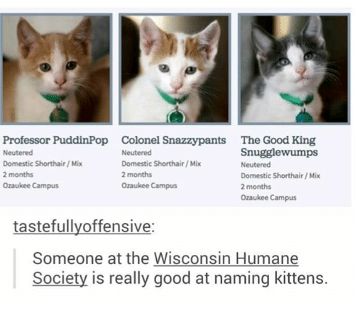 Good, Humane Society, and Kittens: Professor PuddinPop  Neutered  Domestic Shorthair/ Mix  2 months  Ozaukee Campus  Colonel Snazzypants  Neutered  Domestic Shorthair/ Mix  2 months  Ozaukee Campus  The Good King  Snugglewumps  Neutered  Domestic Shorthair/Mix  2 months  Ozaukee Campus  tastefullyoffensive:  Someone at the Wisconsin Humane  Society is really good at naming kittens.