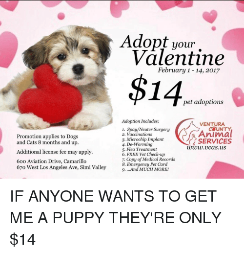 Funny, Los Angeles, and Aviation: Promotion applies to Dogs  and Cats 8 months and up.  Additional license fee may apply.  60o Aviation Drive, Camarillo  67o West Los Angeles Ave, Simi Valley  Adopt your  Valentine  February 1-14, 2017  $14  pet adoptions  Adoption Includes:  VENTURA  1. Spay/Neuter Surgery  Animal  2. Vaccinations  3. Microchip Implant  SERVICES  4. De-Worming  www.v cas.uS  5. Flea Treatment  6. FREE Vet Check-up  7. Copy of Medical Records  8. Emergency Pet Card  9. ...And MUCH MORE! IF ANYONE WANTS TO GET ME A PUPPY THEY'RE ONLY $14