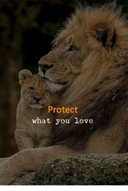 Love, You, and What: Protect  what you Love