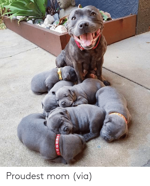 Mom: Proudest mom (via)